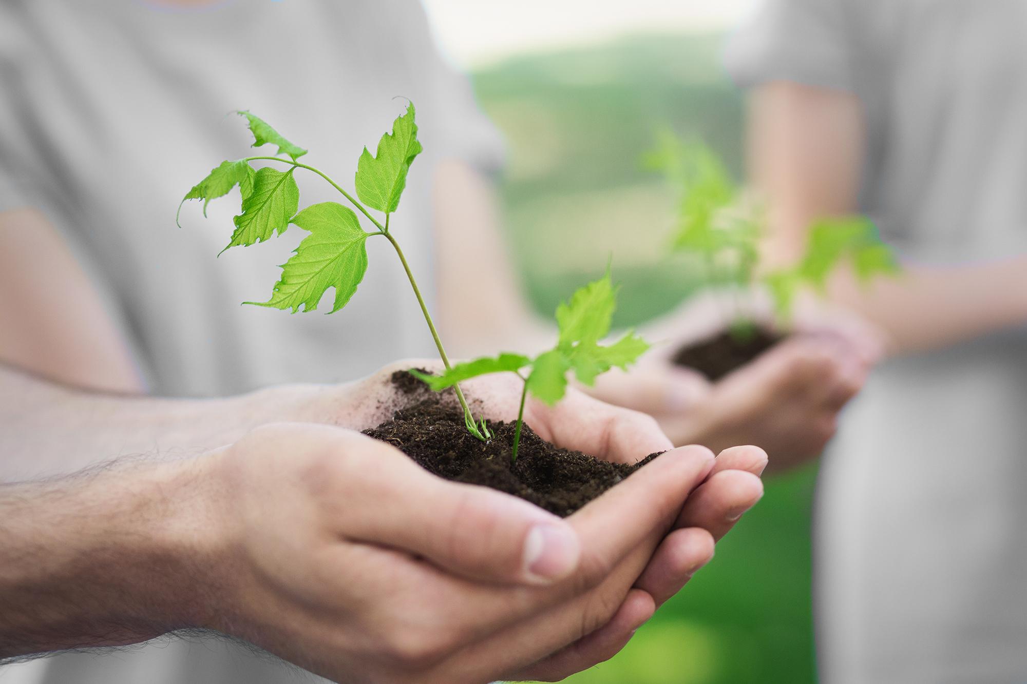Volunteers tree planting color