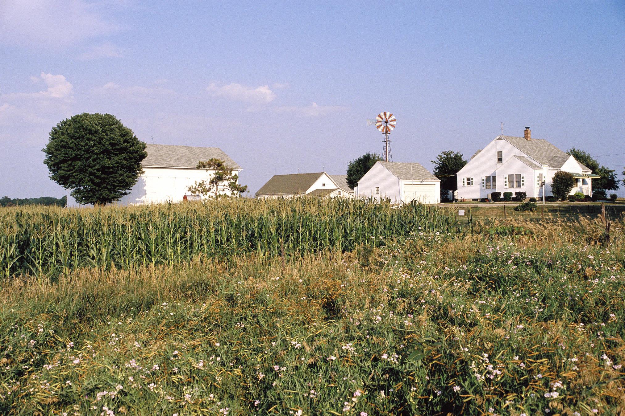 Down on the farm 2