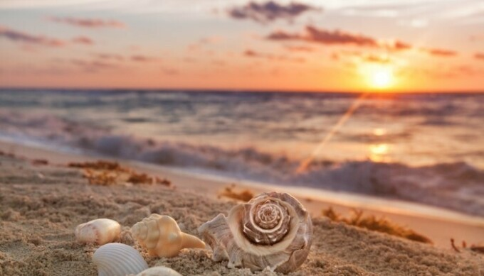 Sea shells scattered in the sand at the beach.