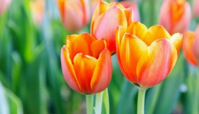 FF flowers in bloom 700 X467