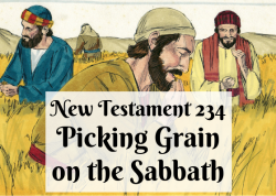 NT 234 - Picking Grain on the Sabbath