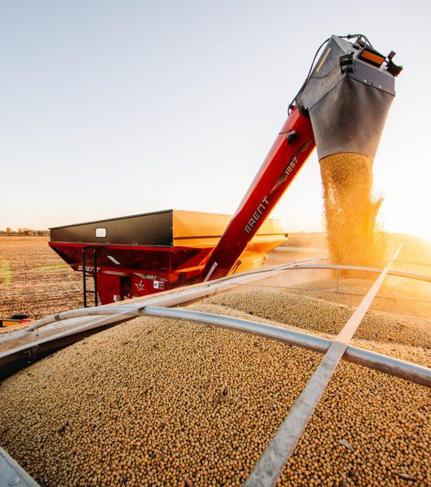 pouring grain 232