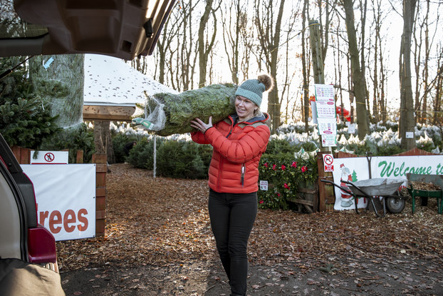 A woman in a red parka and blue winter hat carries a net-wrapped pine tree through a Christmas tree farm toward the open trunk of a car. In the background are dozens of smaller Christmas trees and two semi-obscured signs -- one with a picture of Santa Claus and the other with a welcome message in green cursive.