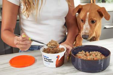 woman spooning petplate food into pet bowl while dog peeks over counter