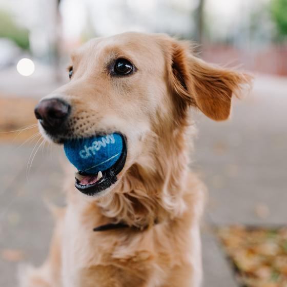 Dog catching a ball in his mouth in an ad for Chewy.