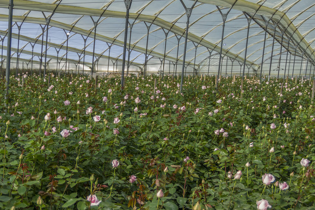 Bloomsybox flower farm.