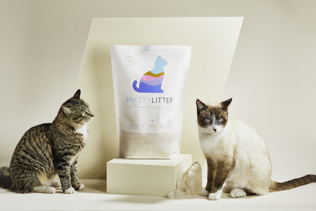 Two cats sit on either side of a bag of cat litter against a white background