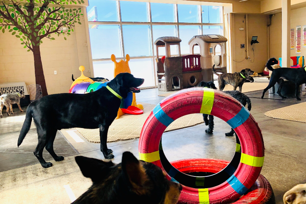 An indoor playground for dogs, featuring red-painted tires, a tunnel shaped like a caterpillar and a climbable two-story Playskool playhouse. A leafy tree is painted on the back wall next to a wide set of windows. Dogs of various sizes roam the room; all of them are wear neon green collars.
