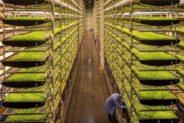 Aero Farms indoor vertical farming display.