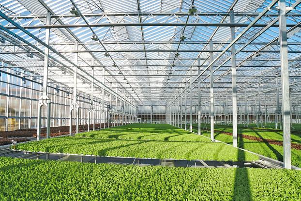 Interior of urban greenhouse Gotham Greens.