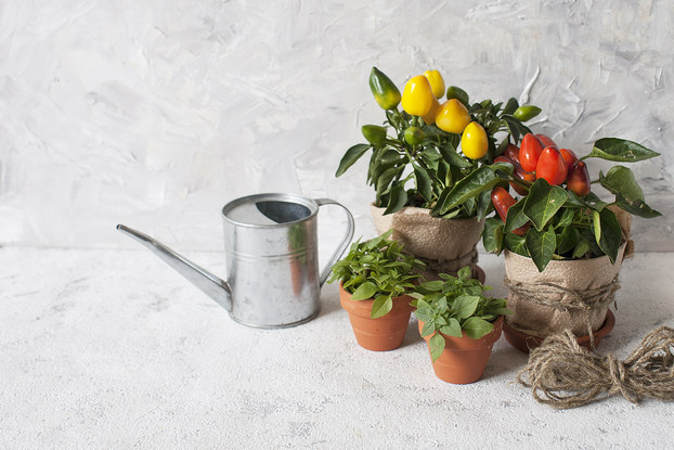 plans and watering can