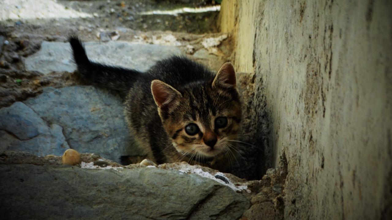 photo of lost kitten