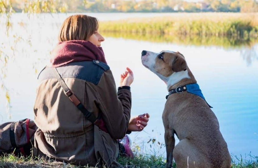 woman and dog looking at each other