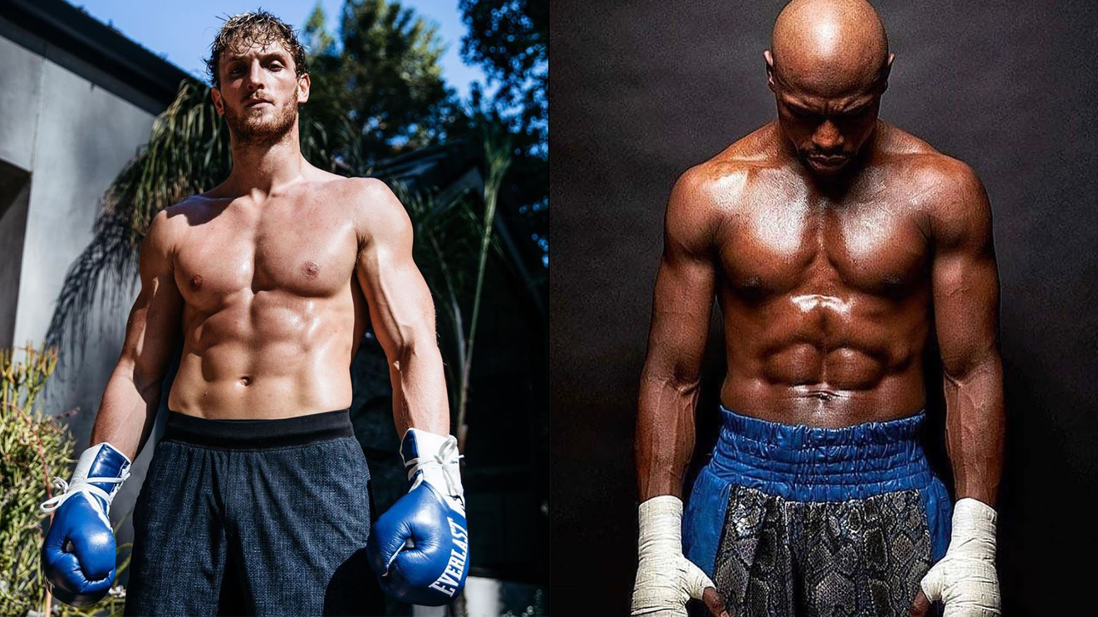 Betting odds on mayweather fight henlow dogs betting odds