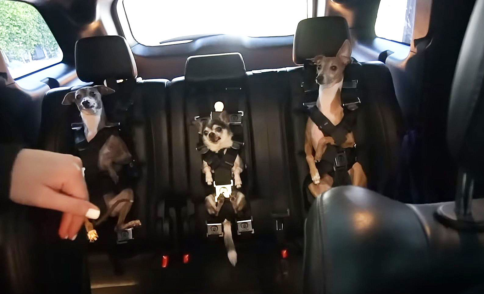 Jenna Marbles dog car harness