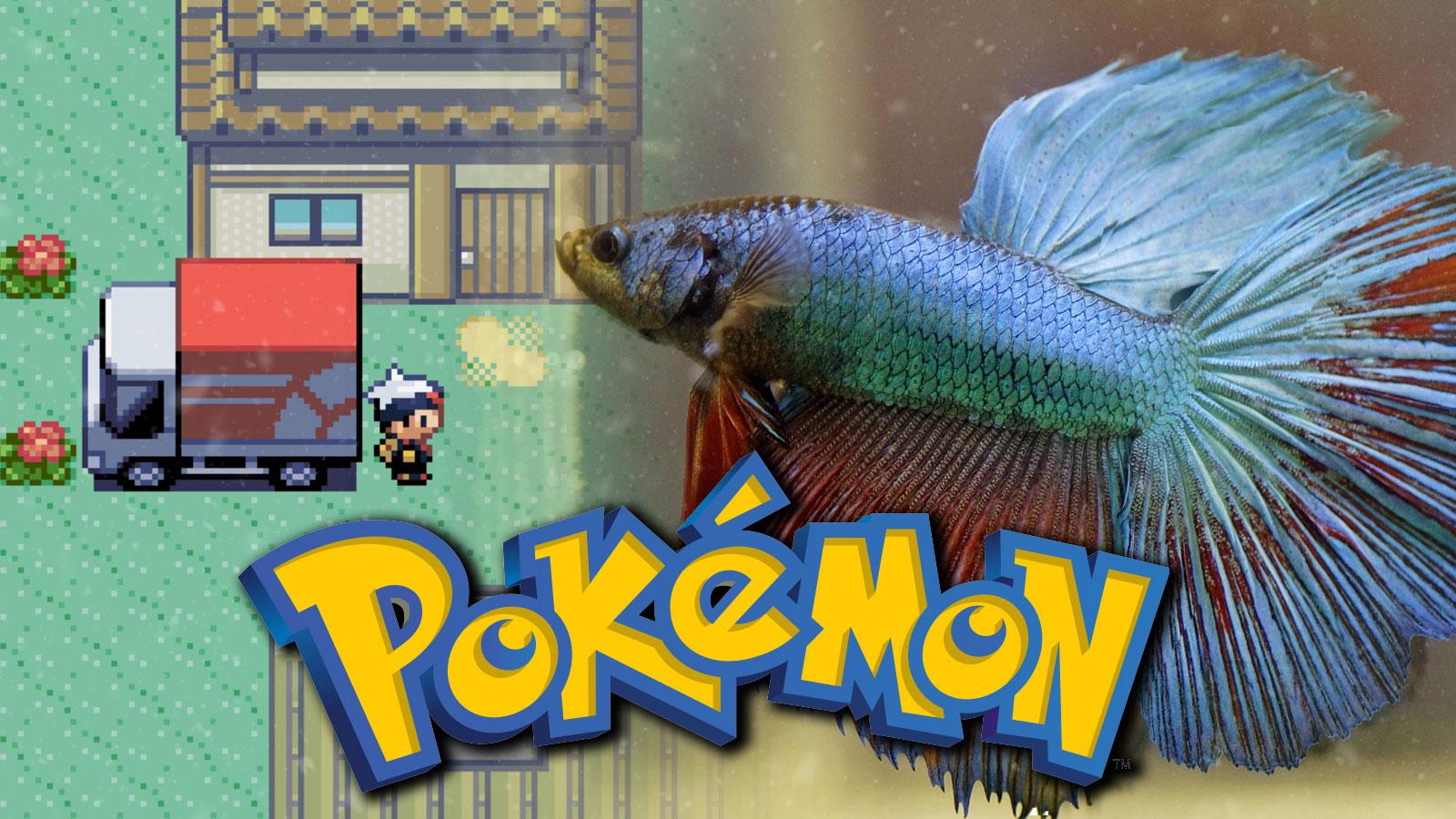 pet fish pokemon ruby