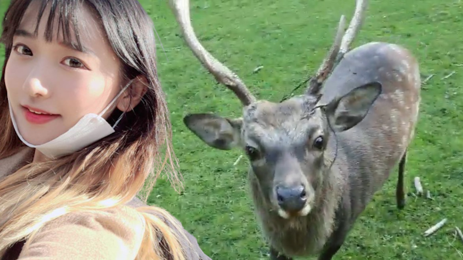 Jinny attacked by deer