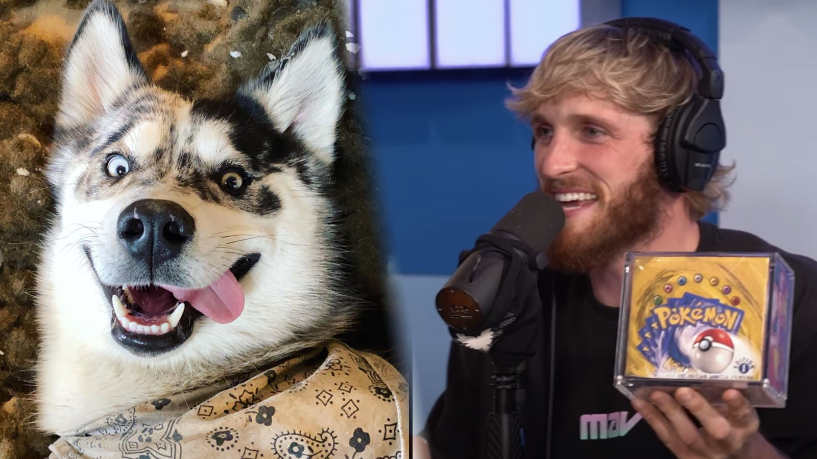 logan paul's dog and logan with pokemon cards