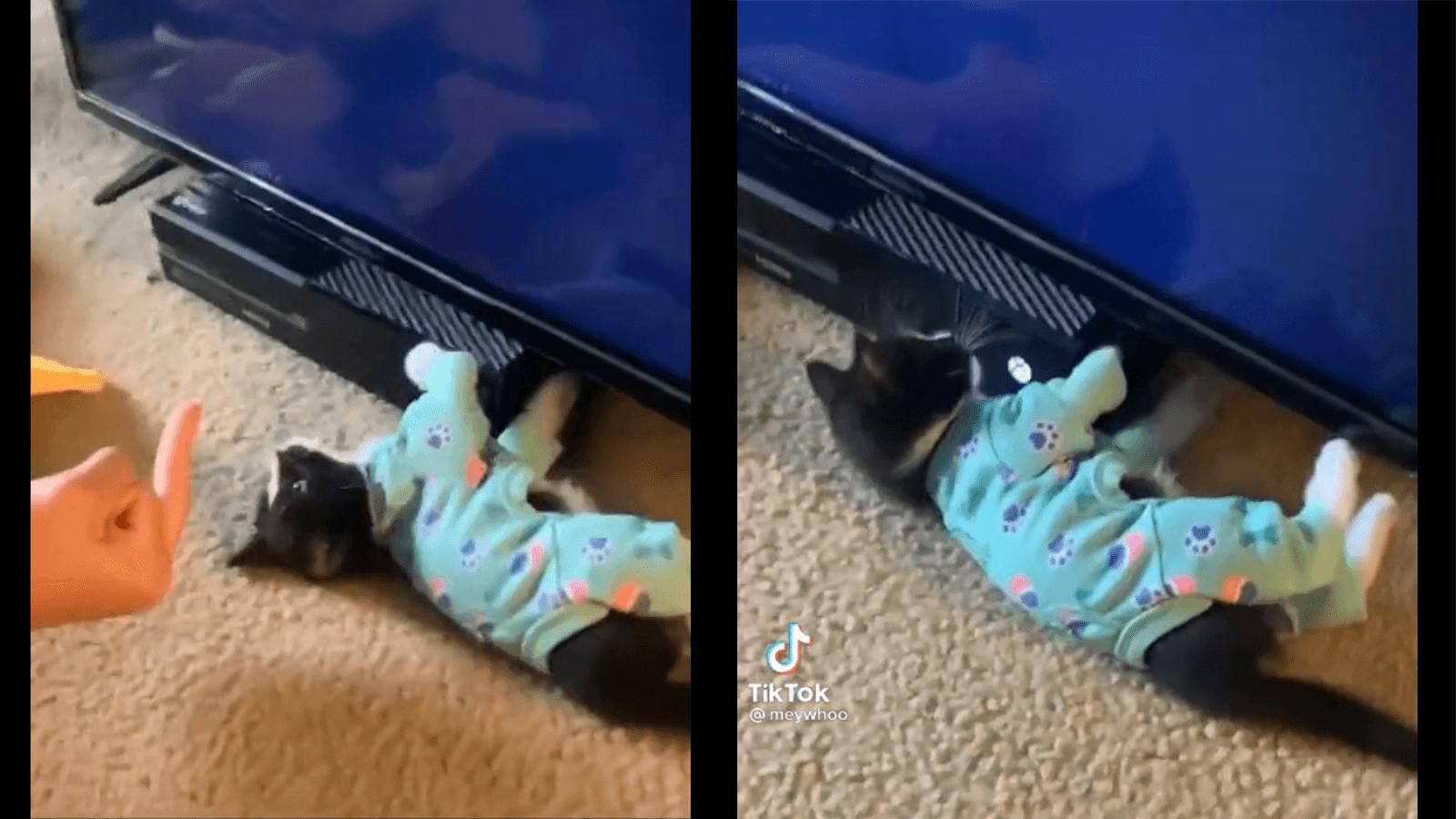 TikTok viral xbox kitten