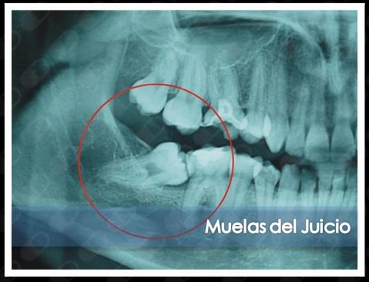 Laura Karina Uribe Fentanes - Multimedia