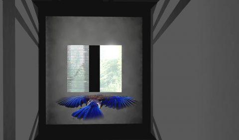 Bird Safe 7