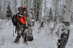CO Rifle Elk 2011 223