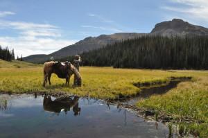 Colorado Elk 2010 054