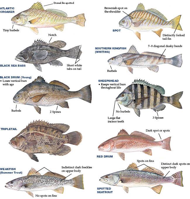 fishay_fishay