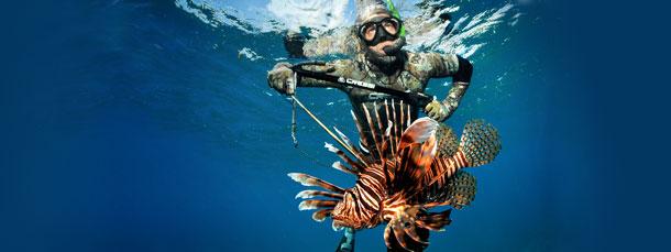 Lionfish Updates
