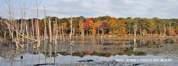 Help Protect Connecticut's Cherished Widlife Habitat!