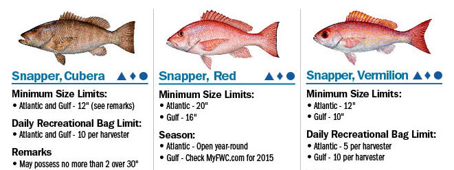 Reef Fish Regulations