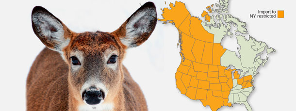 Fight Chronic Wasting Disease Through Disease Prevention