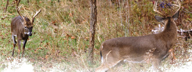 Deer Hunting Season in Review