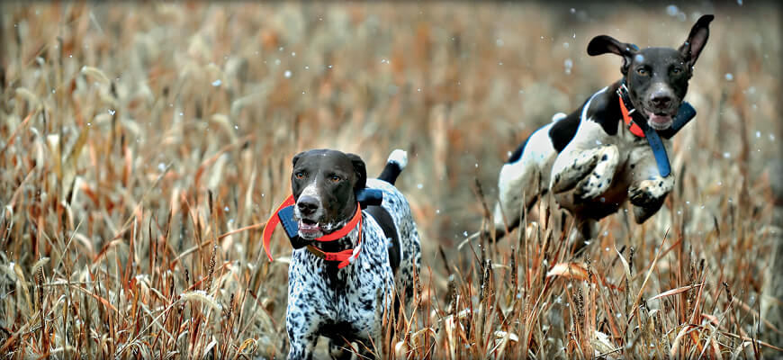 Indiana Hunting Seasons & Regulations 2016