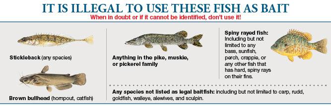 Fresh fishing bait for Maine freshwater fish