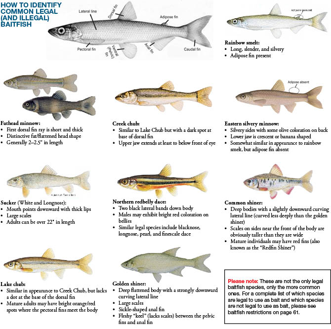 2016 2017 Michigan Fishing Guide Autos Post