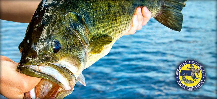 Massachusetts Hunting & Fishing Regulations