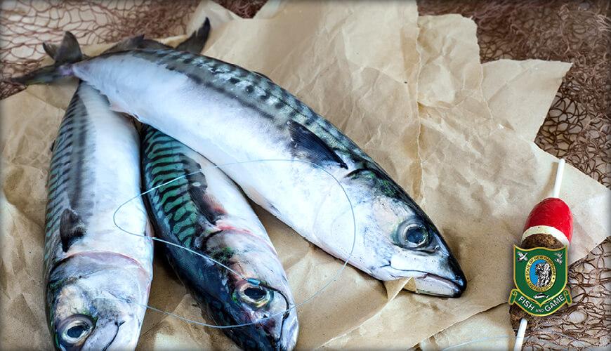 New Hampshire Saltwater Fishing Regulations