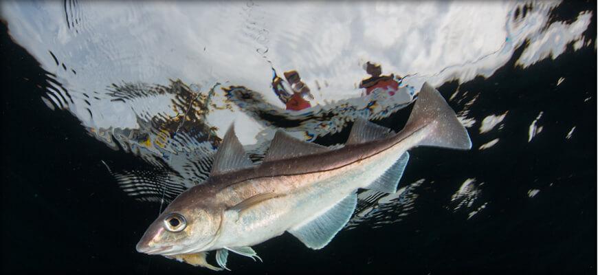 Massachusetts Saltwater Fishing Regulations