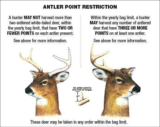 White Tailed Deer Antler Restriction