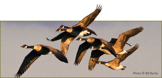 General Hunting Regulations