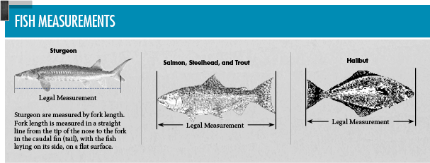 General statewide regulations oregon fishing regulations for Fish size limits