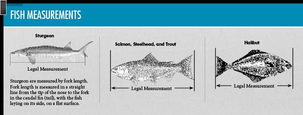 General statewide regulations oregon fishing regulations for Illinois fishing regulations