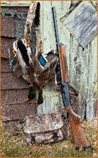 mallards-shotgun_photo-by-troy-gipps