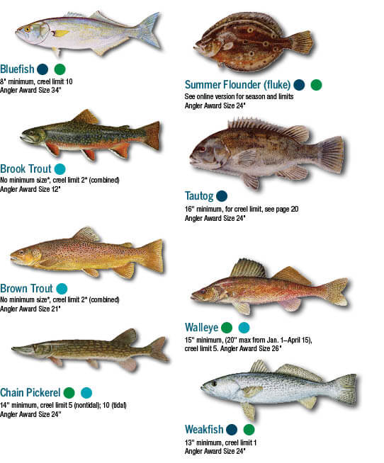 Fish identification maryland fishing regulations guide for Fishing license maryland