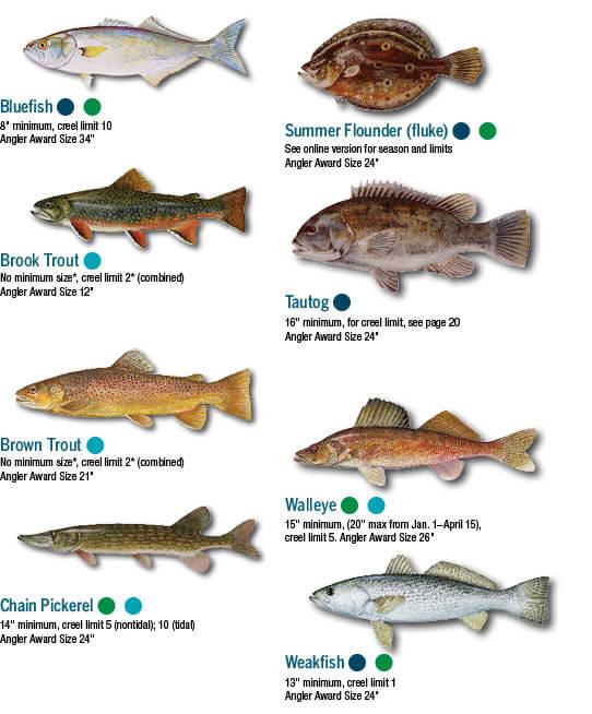Illinois lake michigan fish limits infolakes fish identification maryland fishing regulations guide 2017 sciox Choice Image