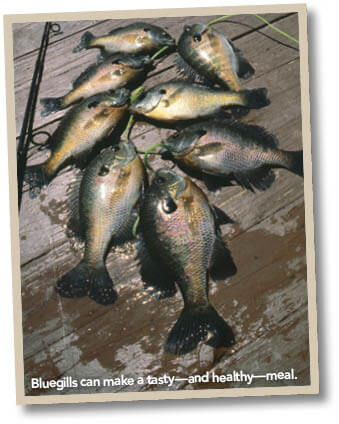 Fish consumption indiana fishing regulations guide for Ohio fishing license 2017