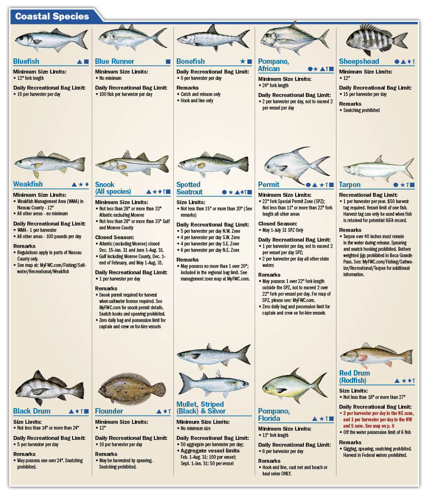 saltwater fish size chart texas shark fishing texas