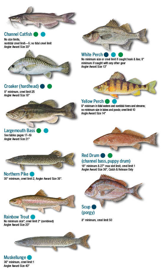 Fish identification maryland fishing regulations guide 2017 help save marylands endangered hellbendersplease do not kill sciox Images