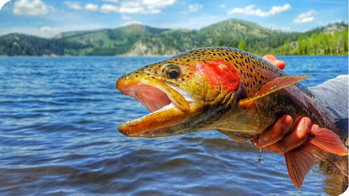 Bait regulations nevada fishing regulations 2017 for How much does a lifetime fishing license cost